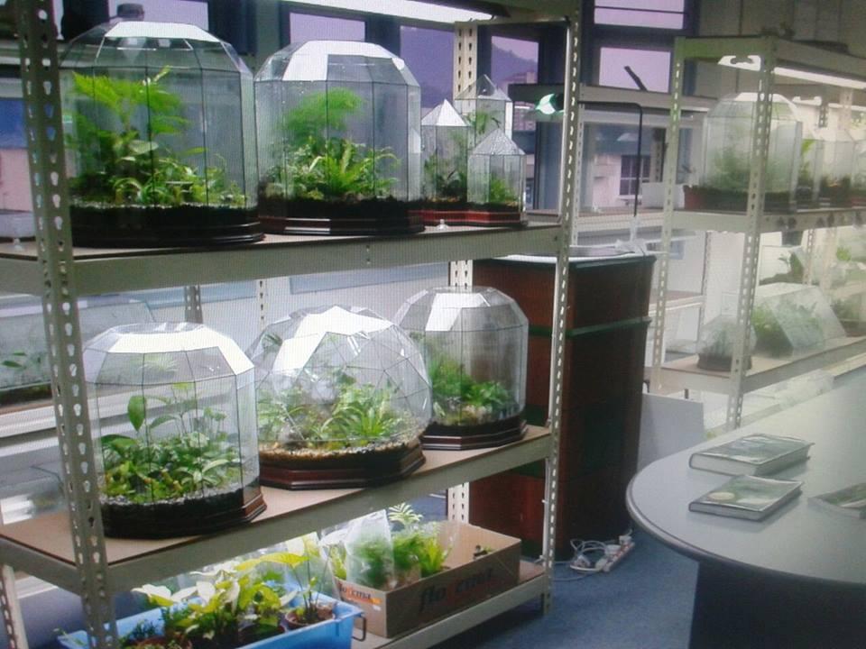 terrarium malaysia